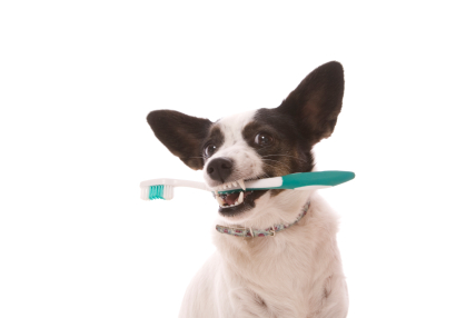 dental-dog-care-montreal-teeth-cleaning-dents-chiens-chats-dentist-week-